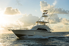 Billistic Sportfishing
